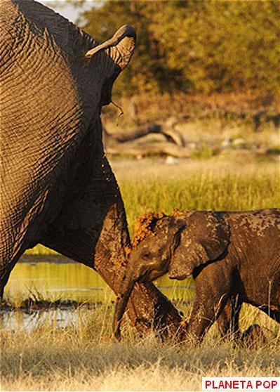 elefante-cagado
